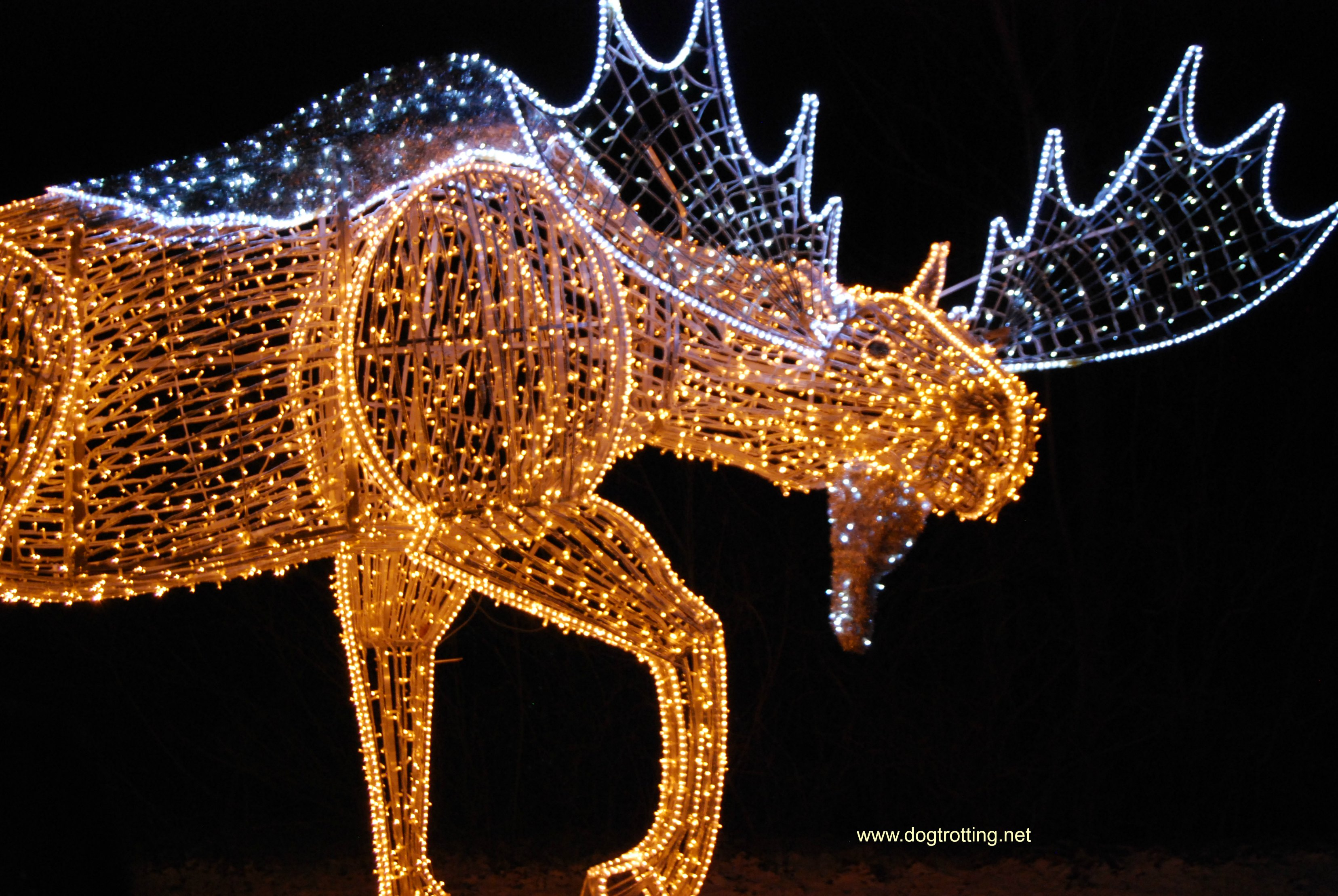 Travel Niagara Falls, ON: Pawing Around the Winter Festival of Lights (with the dog)