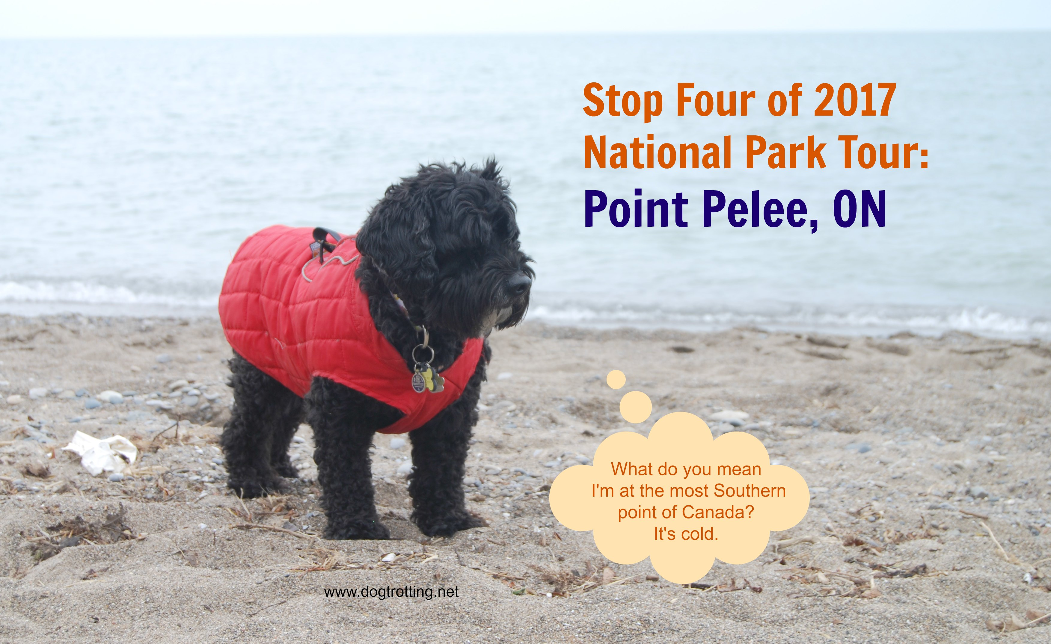 Park Quest Site #4: Dog Day at Point Pelee National Park