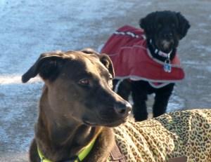 dogs Deerhurst