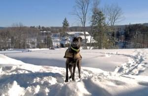 Sasha on the trail