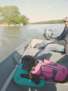 dog boat Byng Island