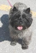 friendly dog at Peterborough Farmers Market