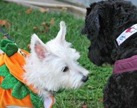 victor meets pumpkin friend