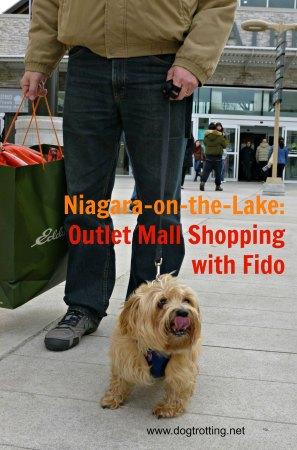 dog-at-notl-mall