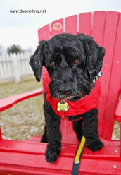 Dog-friendly Fort George in Niagara on the Lake www.dogtrotting.net