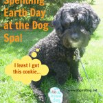 Dog Victor Celebrating Earth Day at the dog spa