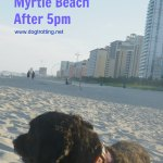 dog on beach at Myrtle Beach South Carolina