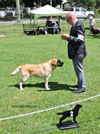 The Kilbride & District Kennel Club
