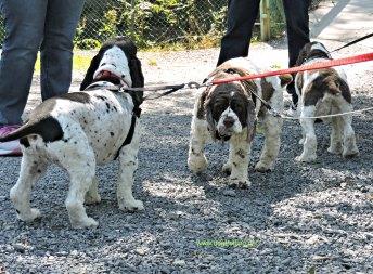Wigglebutts Warriors dog fundraiser at Knoebels, PA