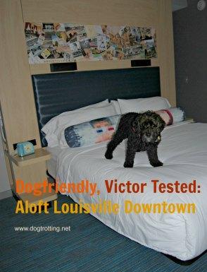 dog on bed at Aloft Louisville Downton Hotel