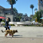 dog walking through Balboa Park, San Diego, California