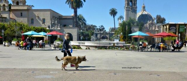dog walking through Balboa Park, San Diego, California