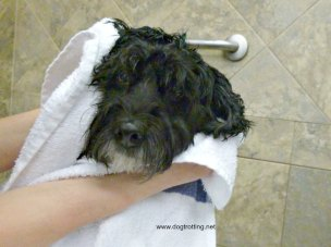 dog in self bath during fundraiser