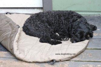 dog sleeping bag 3
