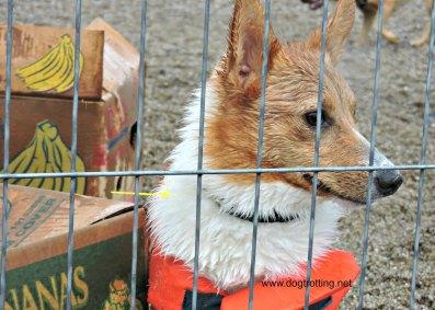 doggie paddle 2