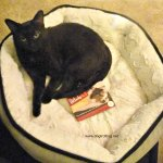 cat in orthopedic dog bed www.dogtrottting.net
