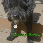 dog with benebone dogtrotting.net
