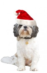 christmas-dog-santa-hat