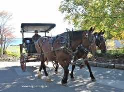 mackinac island horse 1