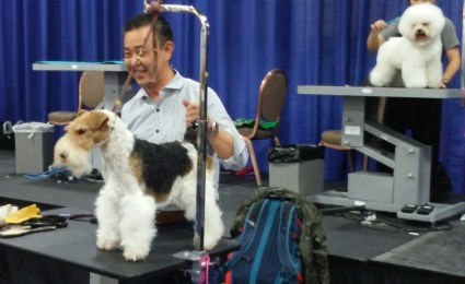 groomer grooming dog at grooming competition at SuperZoo