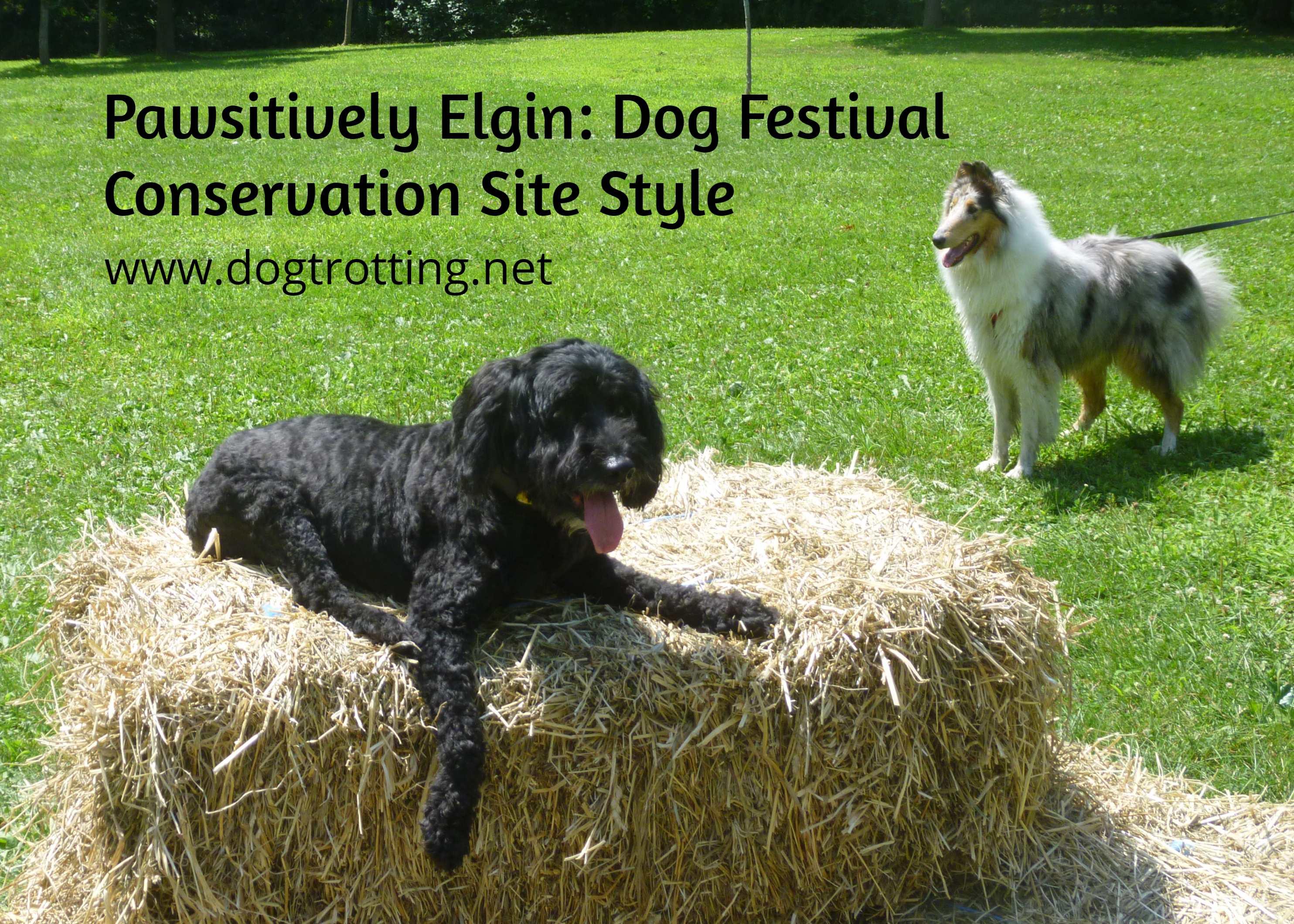 dog at Pawsitivily Elgin 2019
