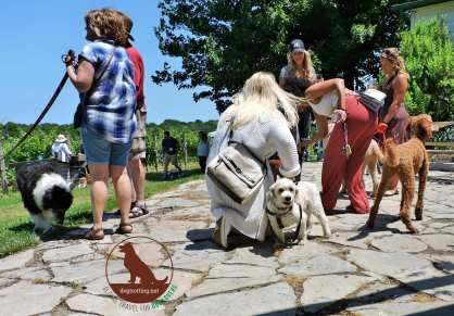 dogs with people at Muddy Paws Wine Festival 2019