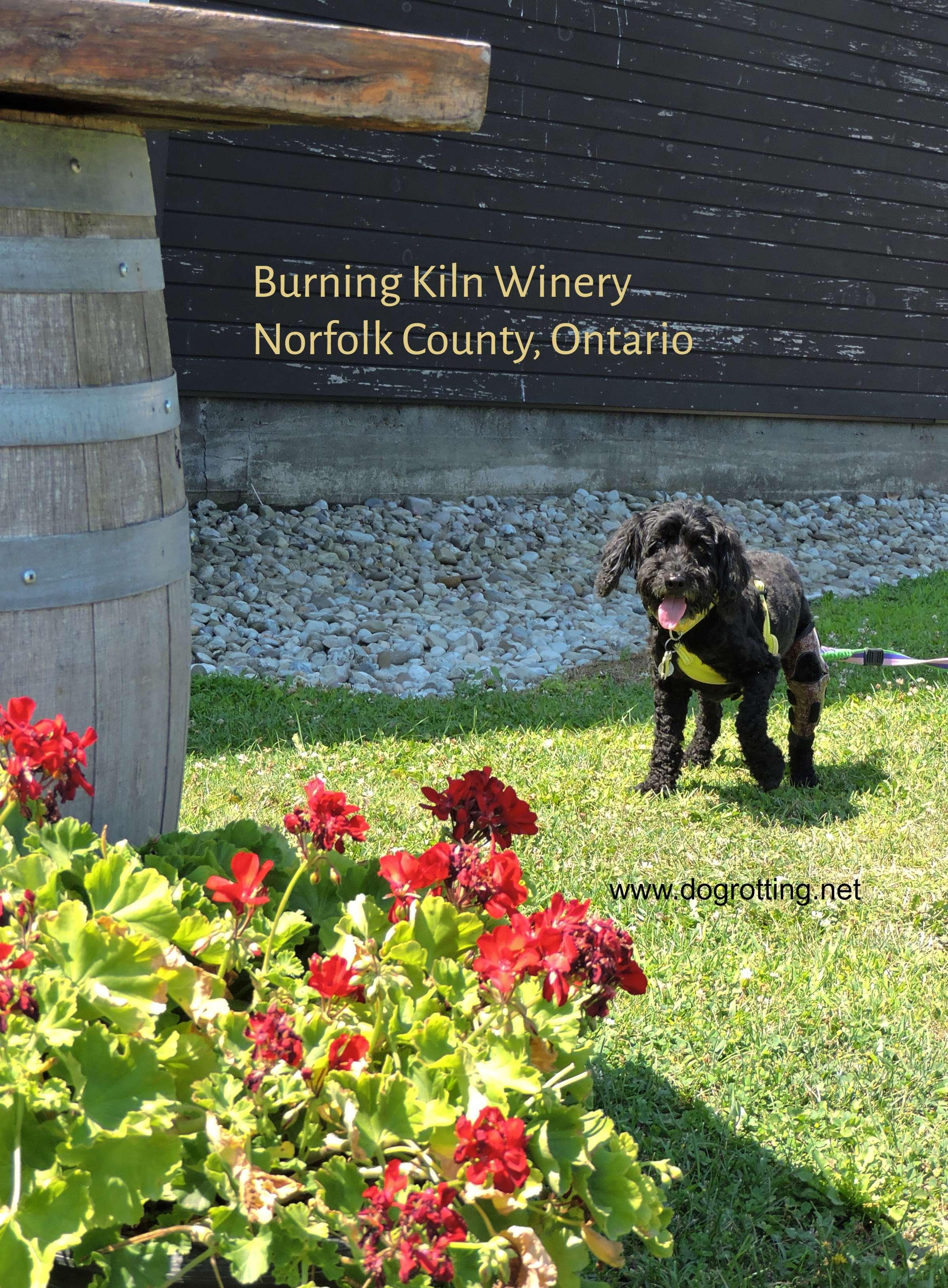 dog at Burning Kiln Winery