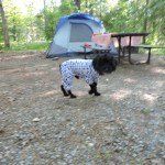dog in pyjamas camping