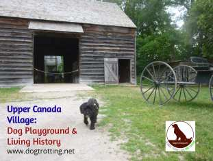 dog at upper canada village in front of barn