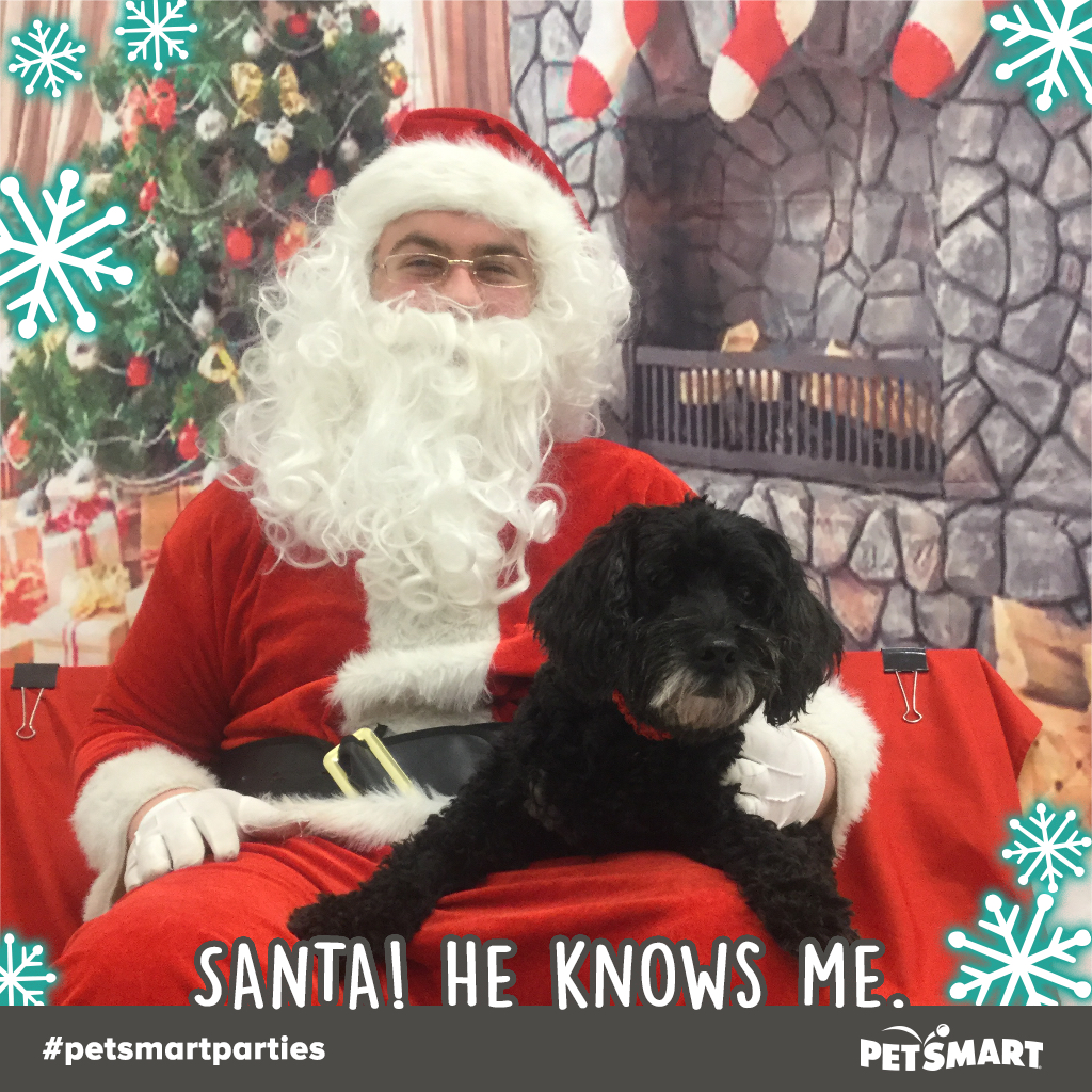 My beautiful black dog with Santa at PetsMart