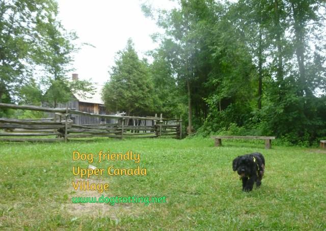 dog at dog-friendly Upper Canada Village