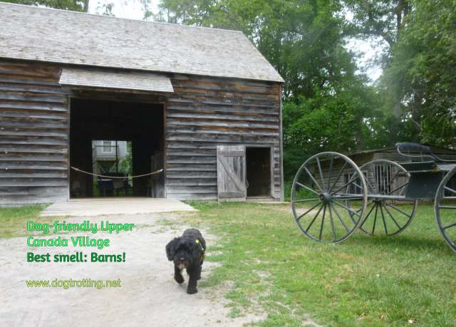 dog in front of barn at dog-friendly Upper Canada Village