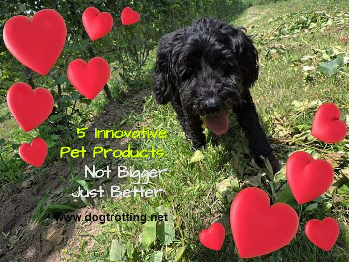 black dog in grass surrounded by hearts