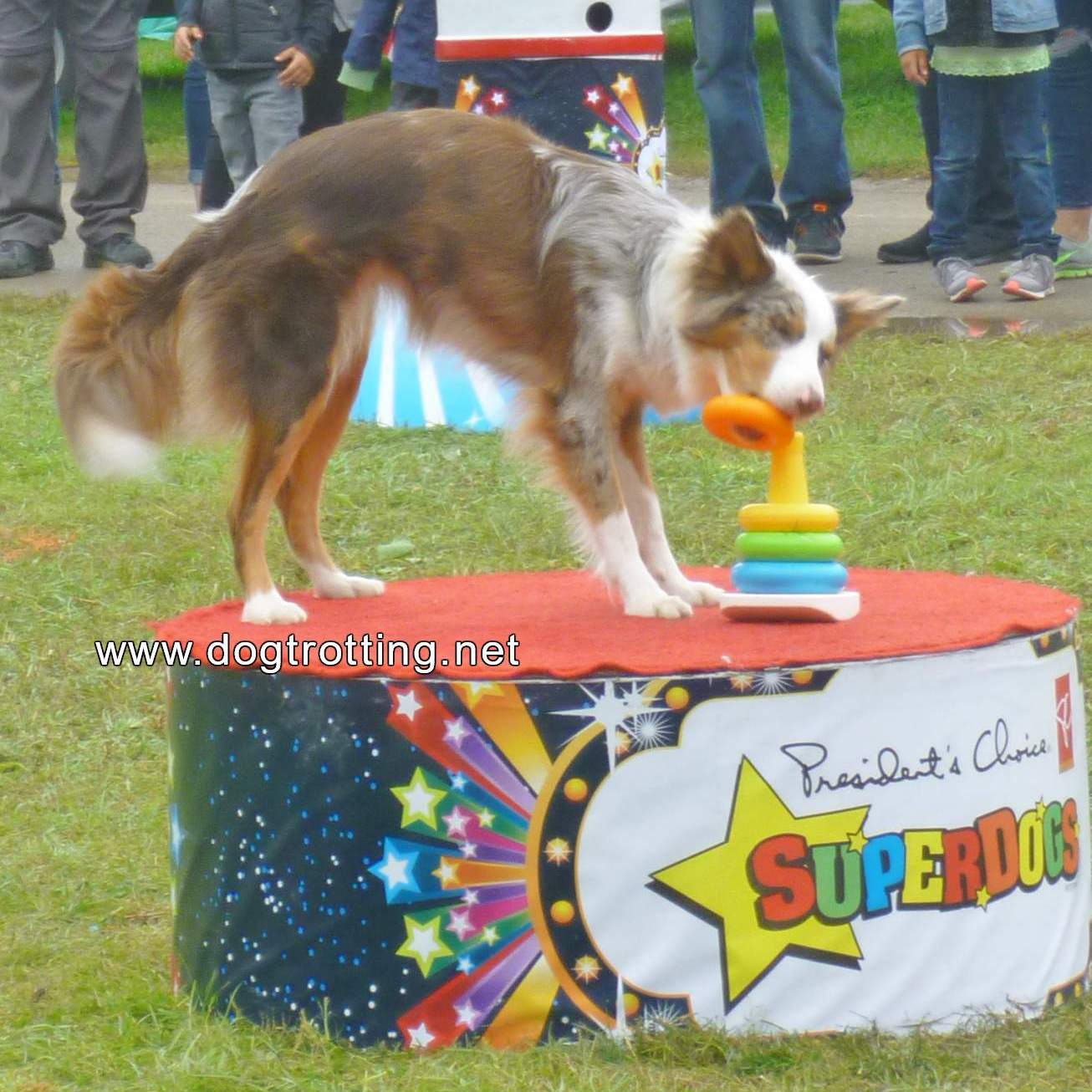 President's Choice SuperDogs border collie completing kids stacking toy