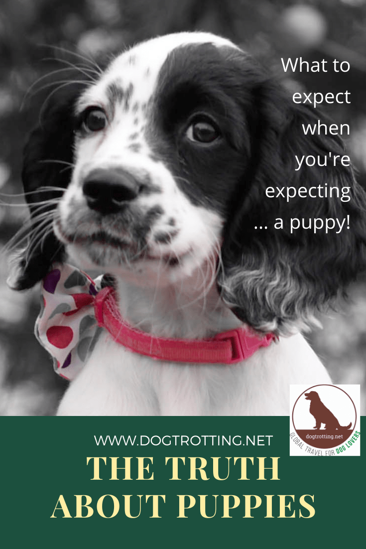 The Truth About Puppies. Or What to Expect When You're Expecting … a Puppy.