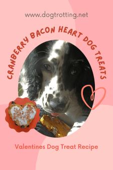 black and white dog eating cranberry bacon dog treat