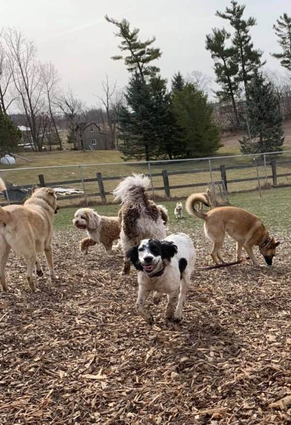 several dogs outdoors at dog daycare
