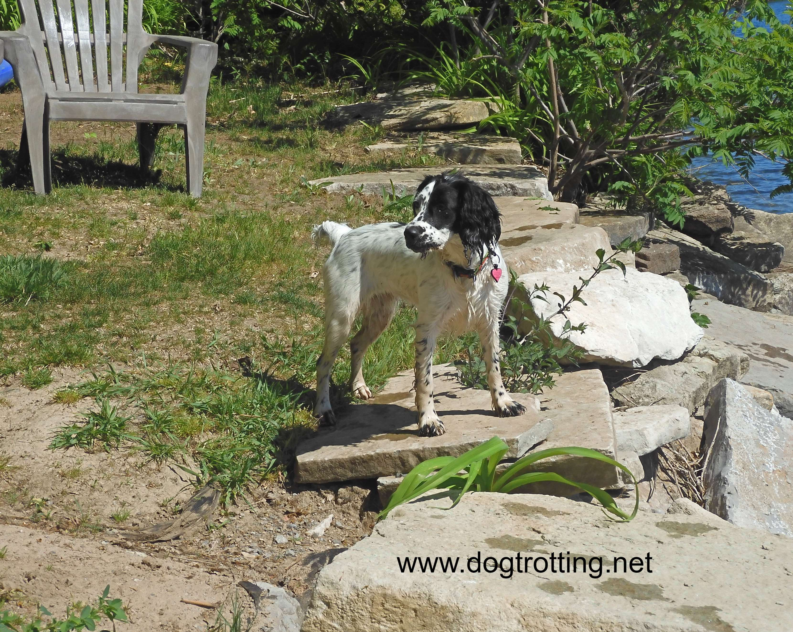 dog at the docks at Woodhaven Dog friendly Resort in Buckhorn, Ontario