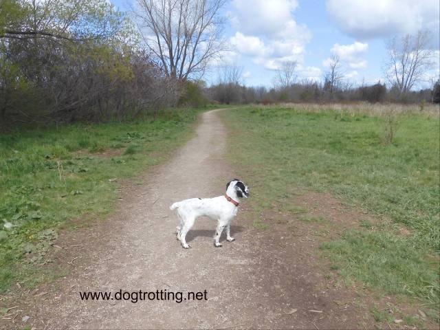 dog at bronte creek provincial park leash free zone