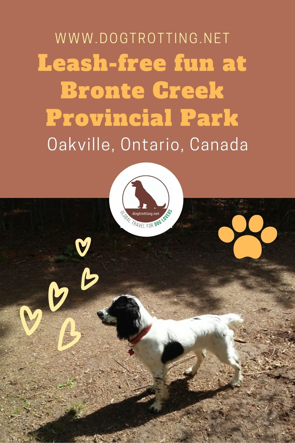 Off leash dog park fun: Oakville's Bronte Creek Provincial Park (and bistro lunch!)