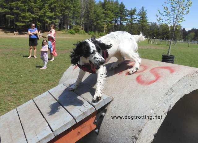 Dog at Ferguson Forest Leash Free Dog Park in Kemptville Ontario www.dogtrotting.net