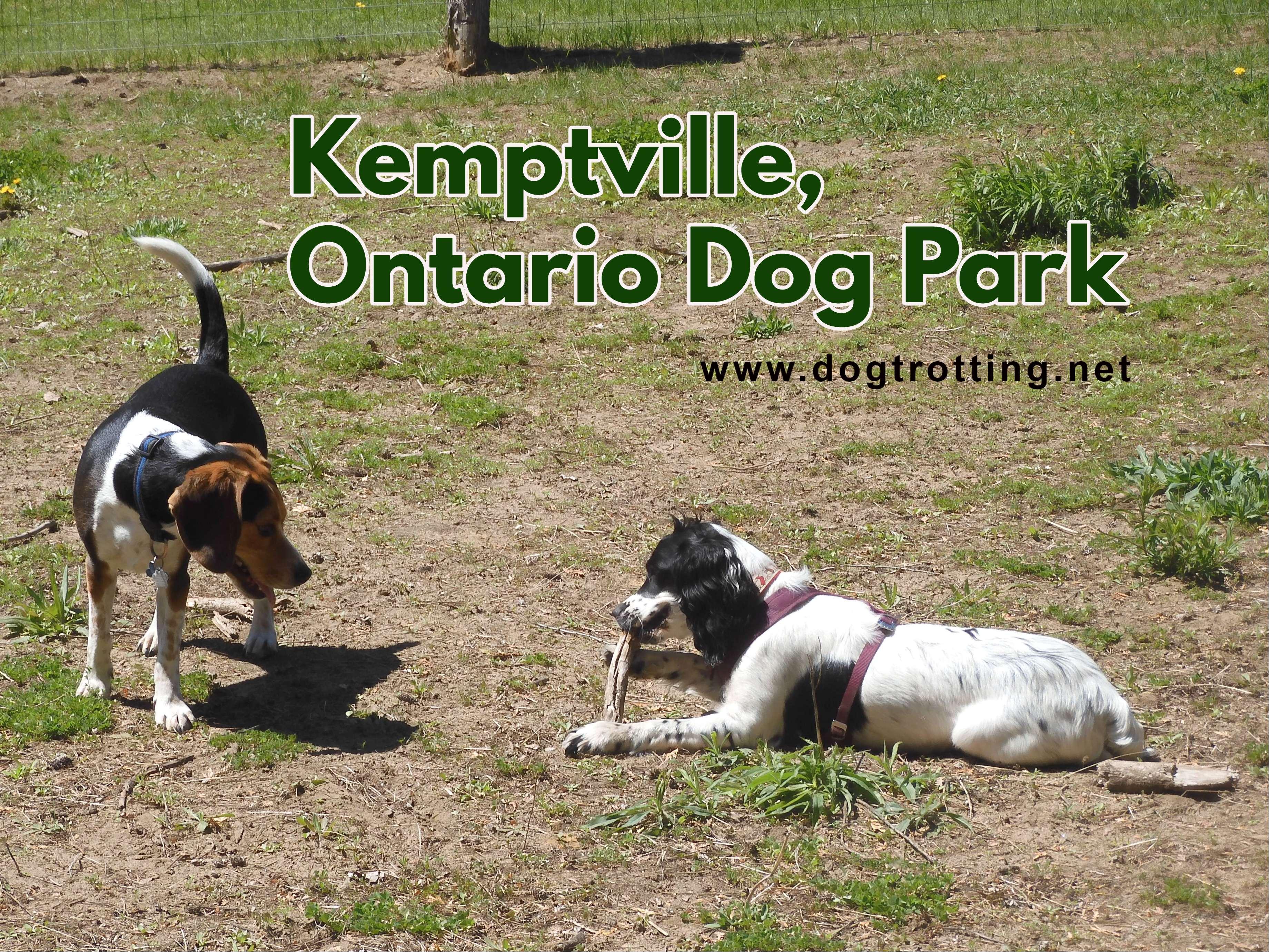 Dog at Ferguson Forest Leash Free Dog Park in Kemptville Ontario
