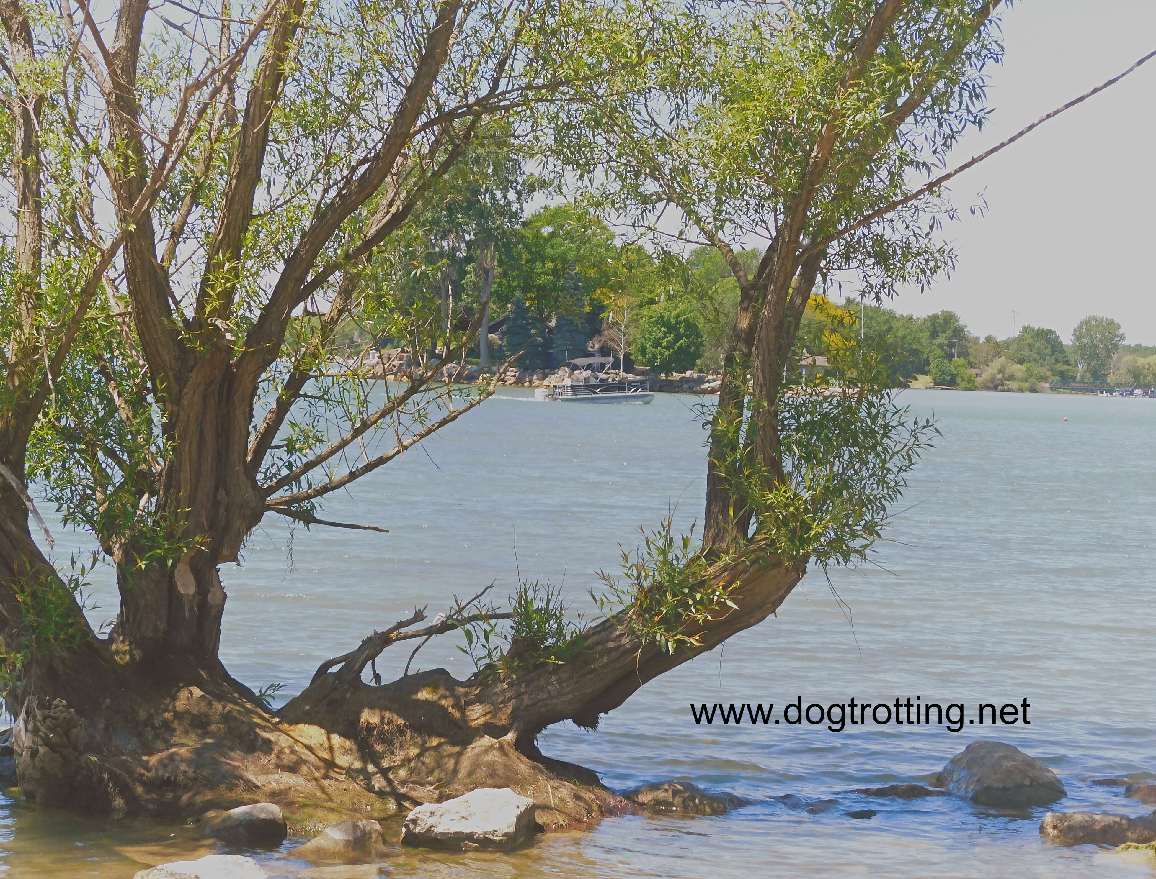 image of boat in the water through trees at Selkirk Provincial Park, Ontario, Canada