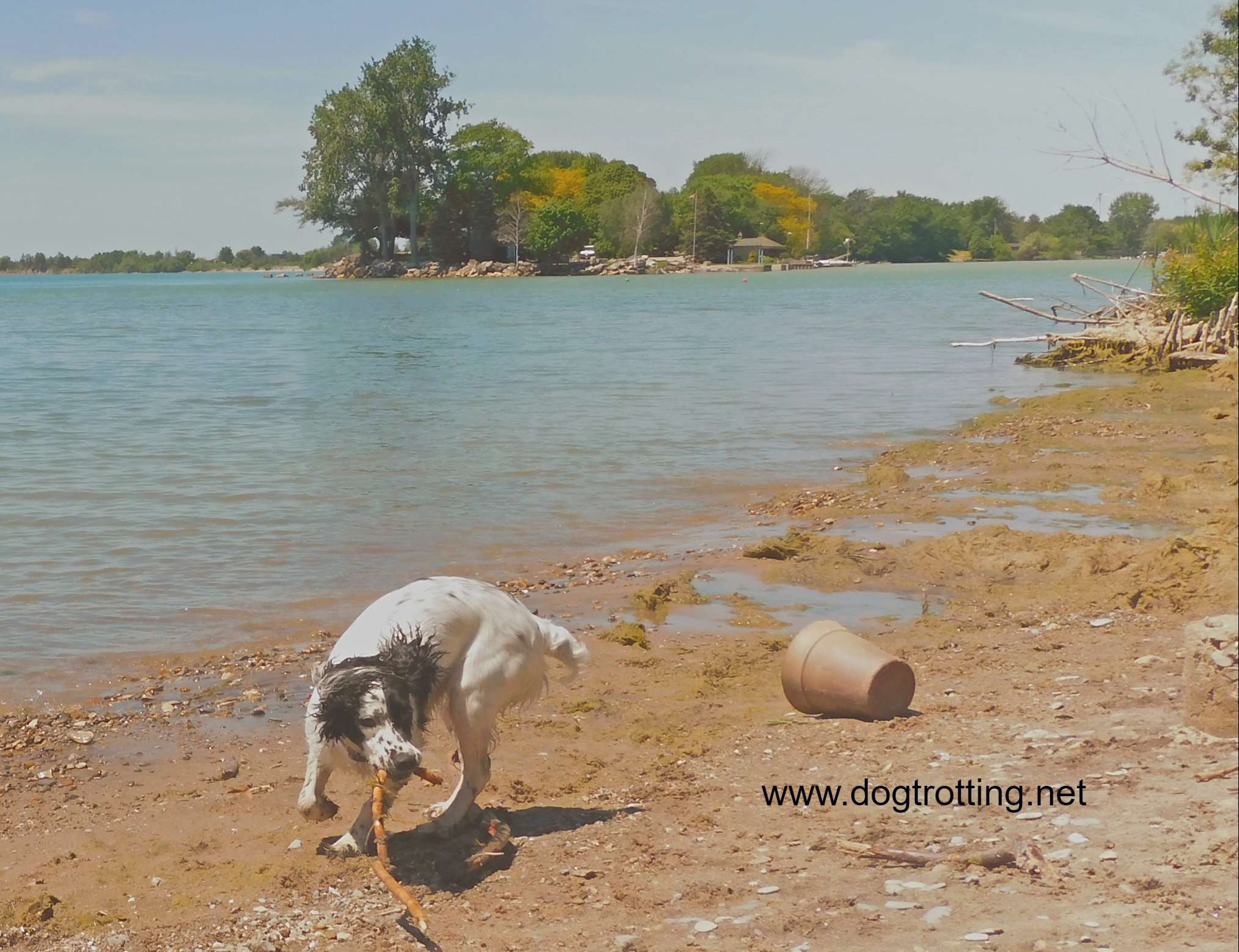 small white and black dog playing on dog beach at Selkirk Provincial Park, Ontario, Canada