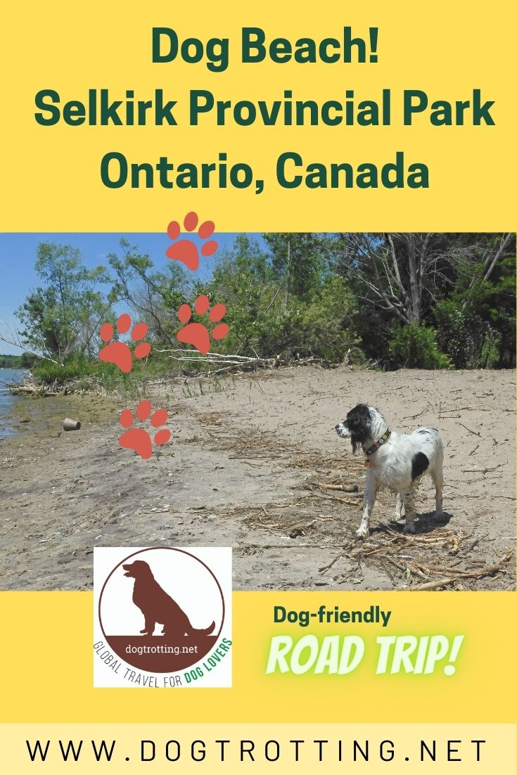 dog on beach promoting dog-friendly Selkirk Provincial Park dog beach in Ontario, Canada