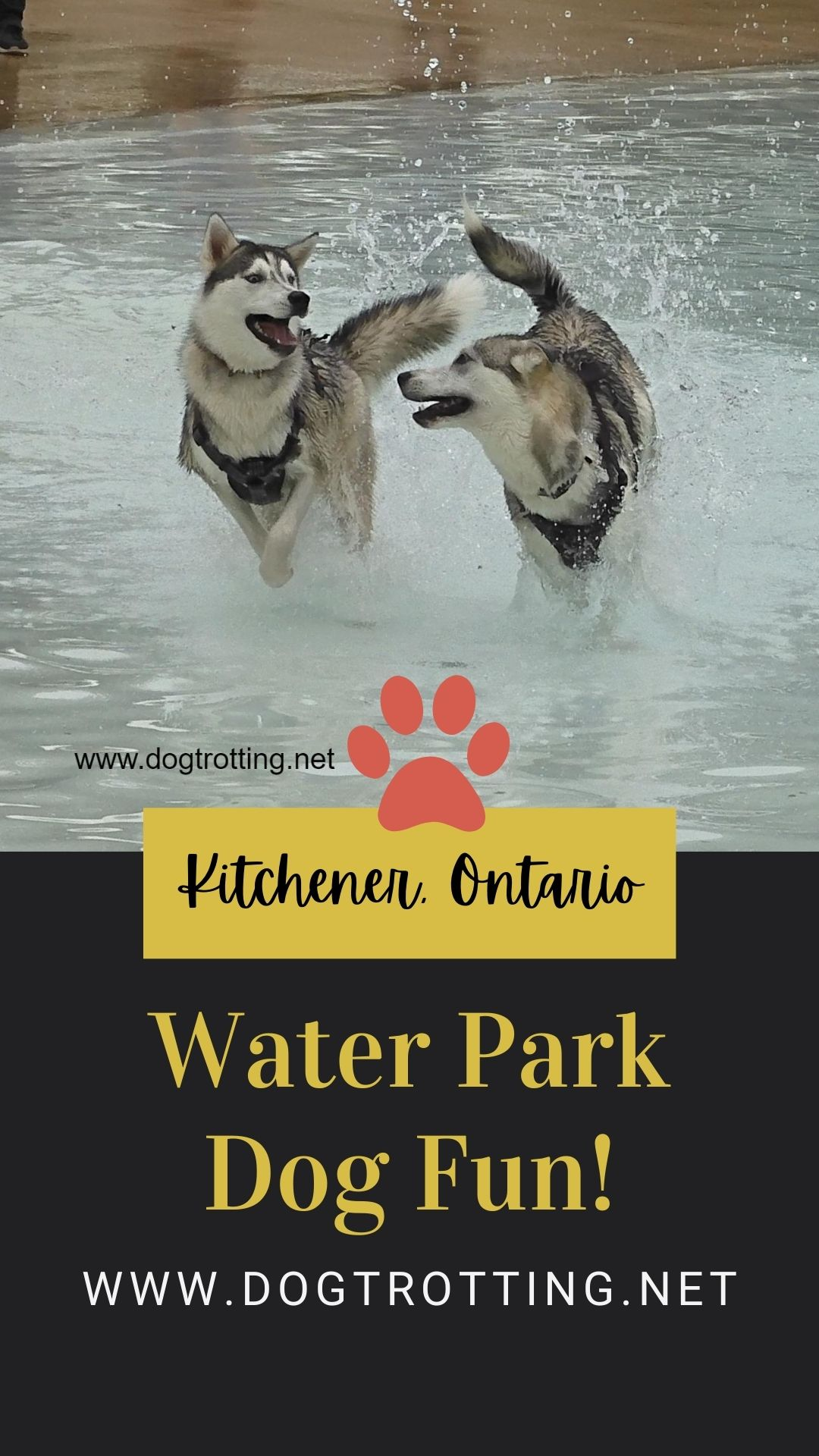 Take your dog to the water park … once a year. (Fundraising fun for water-loving pups)