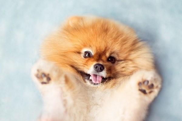 Редкие и красивые имена для собак девочек: лучшие клички