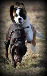 3447_Panting-Puppies