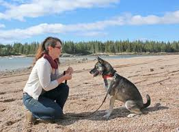 Train Your Dog Faster with Micro-Lessons, Even If You're Too Busy!