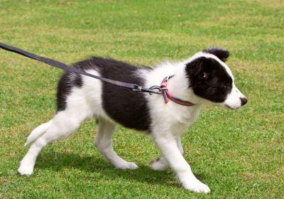 Puppy Cuteness vs Puppy Boundaries